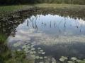 cwiczenia-terenowe-w-parku-narodowym-borow-tucholskich-15