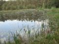 cwiczenia-terenowe-w-parku-narodowym-borow-tucholskich-16