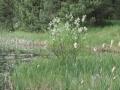 cwiczenia-terenowe-w-parku-narodowym-borow-tucholskich-17