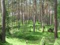 cwiczenia-terenowe-w-parku-narodowym-borow-tucholskich-19