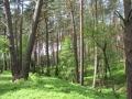 cwiczenia-terenowe-w-parku-narodowym-borow-tucholskich-20
