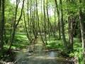 cwiczenia-terenowe-w-parku-narodowym-borow-tucholskich-21