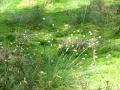 cwiczenia-terenowe-w-parku-narodowym-borow-tucholskich-6