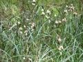 cwiczenia-terenowe-w-parku-narodowym-borow-tucholskich-7