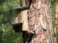cwiczenia-terenowe-w-parku-narodowym-borow-tucholskich-8-skrzynka-dla-nietoperzy